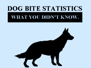 Phoenix-arizona-dog-bite-lawyer