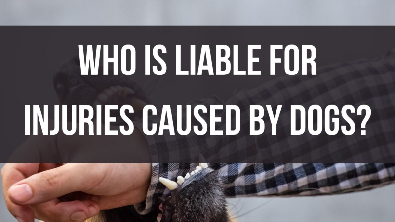 Who is liable for injuries caused by dogs?